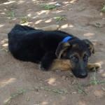 Evo unser neuer Wachhund