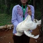 Man suche sich den fettesten Hahn aus ...