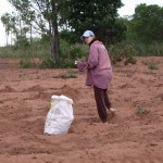 Elli pflanzt Mandioka