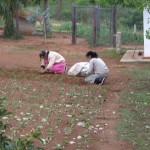 Rasen wird gepflanzt nicht gesät!!