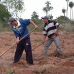Vorbereitung fürs Mandiokapflanzen