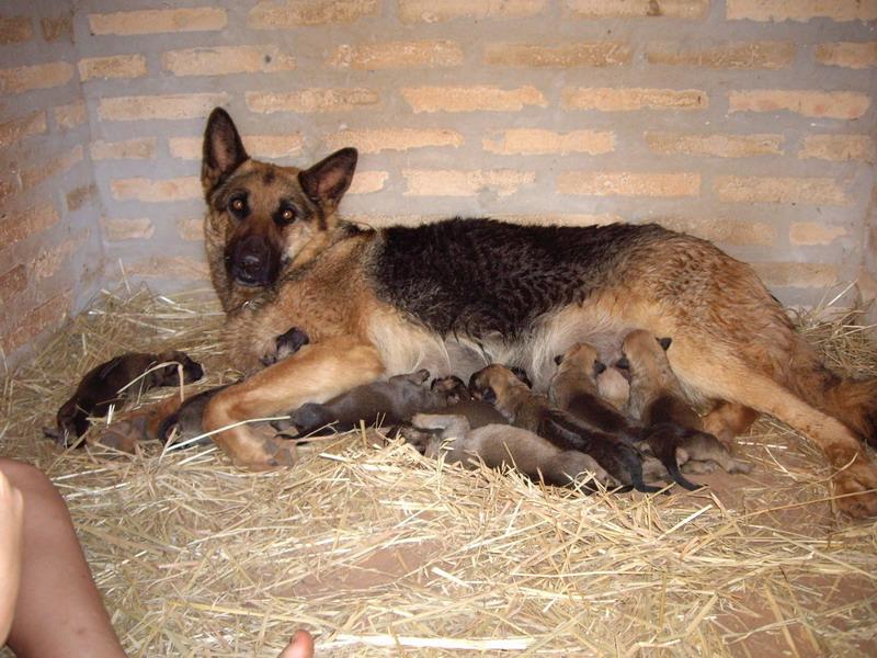 Condi in der Hundehütte mit ihren 8 Jungen
