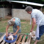 Oma am Hühnchen rupfen