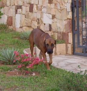 Moshi im Garten
