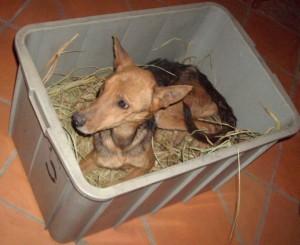 Hund in der Kiste