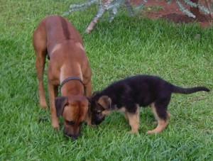 Moshi und Lino